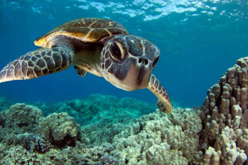 żółw racha yai Phuket