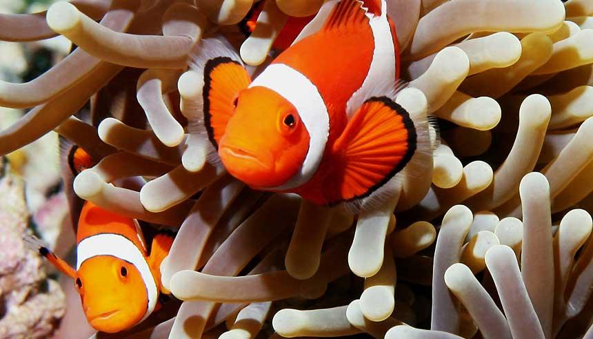 Hurghada nurkowanie rybki