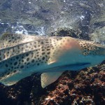 shark point phuket.jpg2