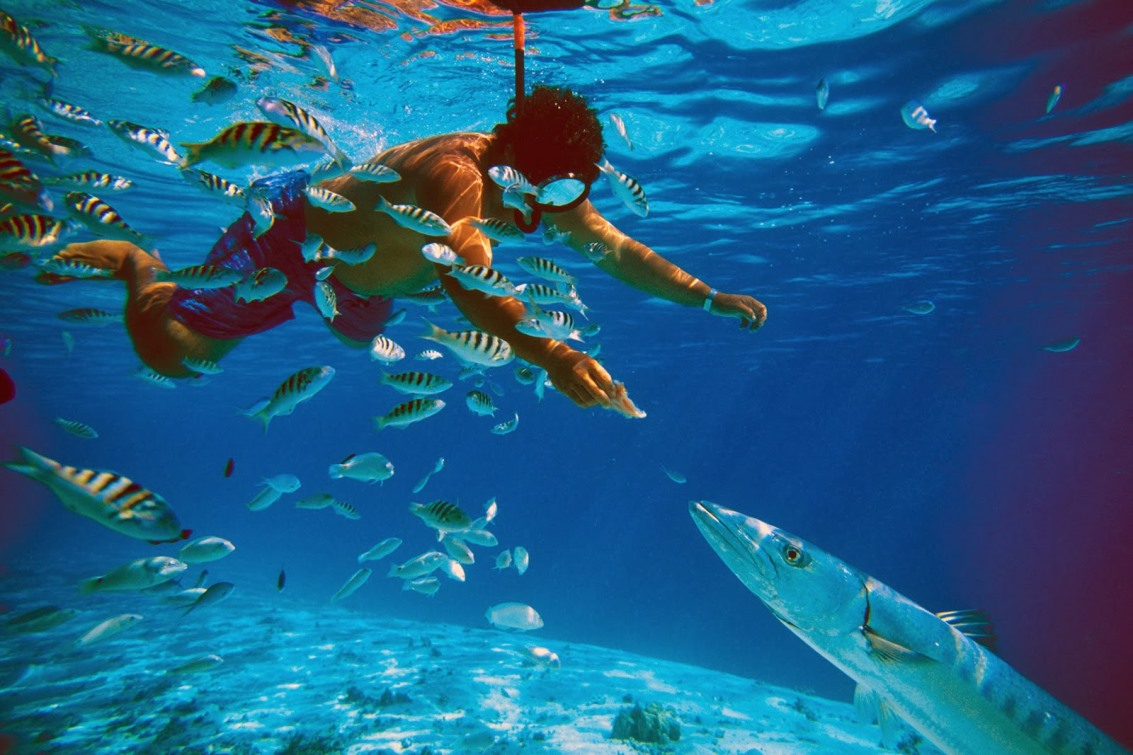 wakacje nurkowe divingpro.eu