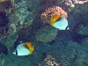 Diving Pro - pod wodą